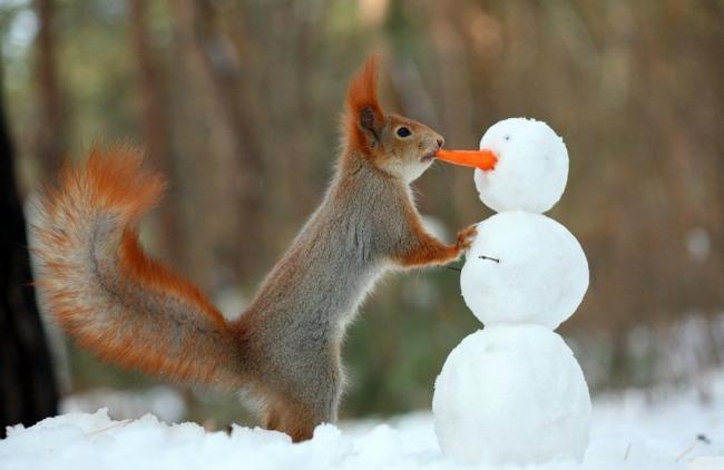 Фото прикол  про белку и снеговика