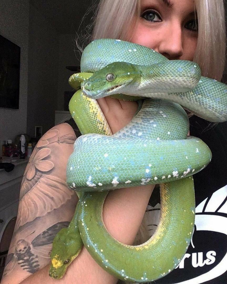 Марта для, смешные картинки про змей