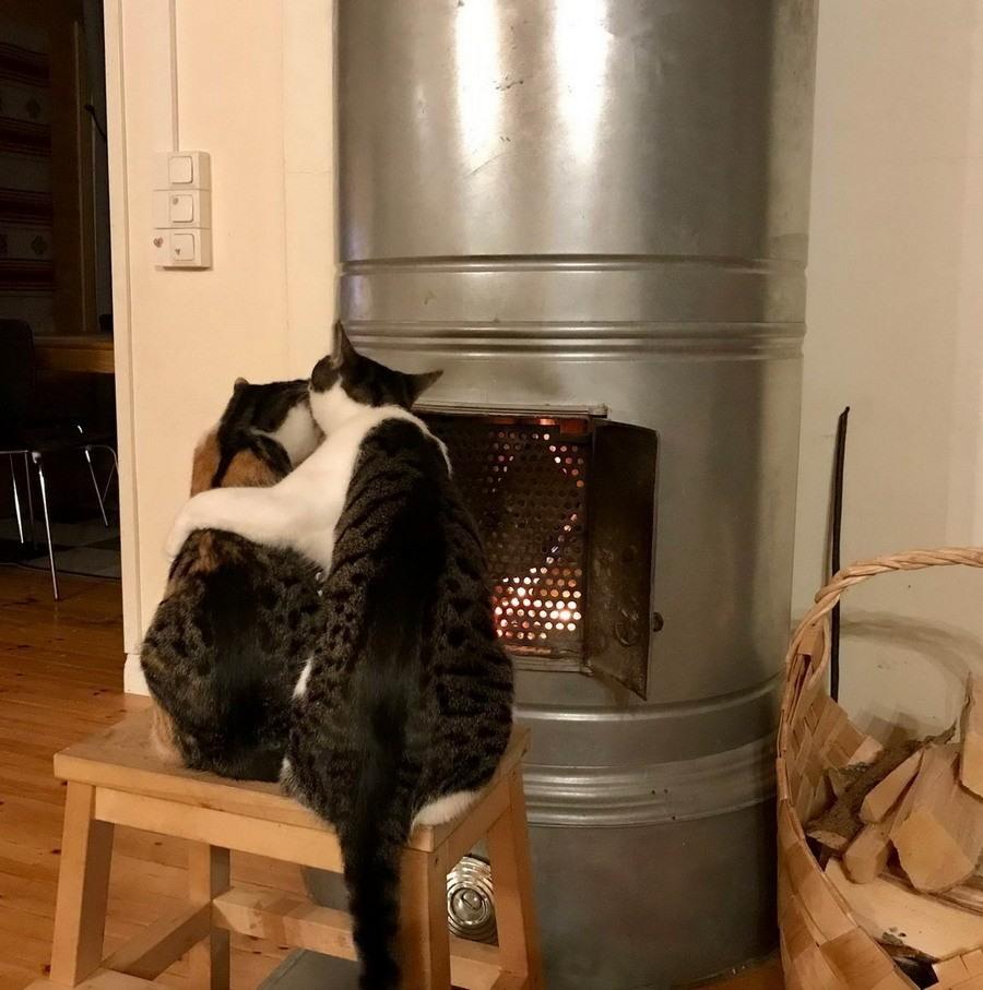 Приколы в картинках про котов