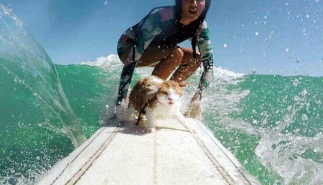 Фото прикол  про серфинг и котов