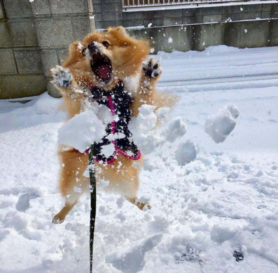 Ура снег идет фото