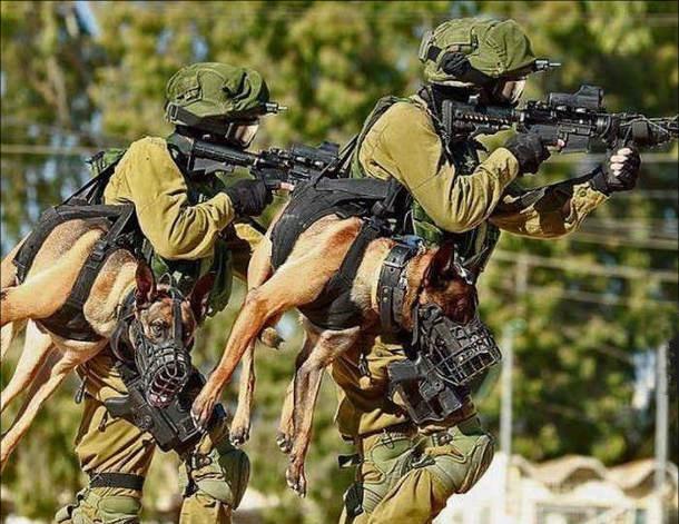 Фото прикол  про спецназ и собак