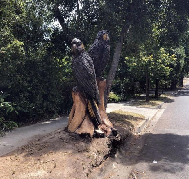Фото прикол  про памятник и попугаев