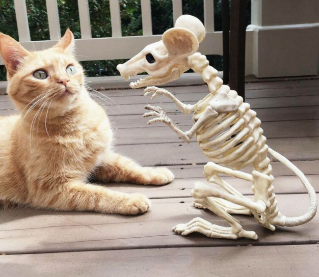 Фото прикол  про котов, мышей и скелет