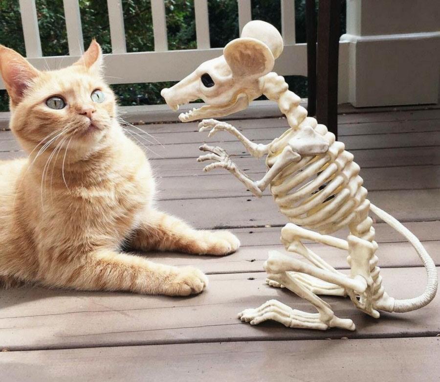 Все смешные картинки про кошек, анимация