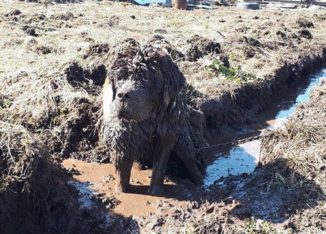 Фото прикол  про собак и грязь