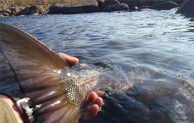 Фото прикол  про рыбалку и рыбу