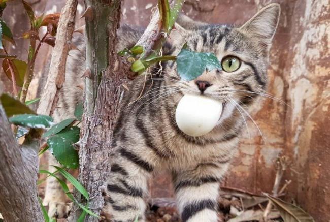Фото прикол  про котов и яйца