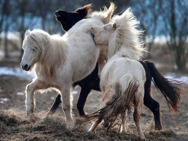 Фото прикол  про лошадей