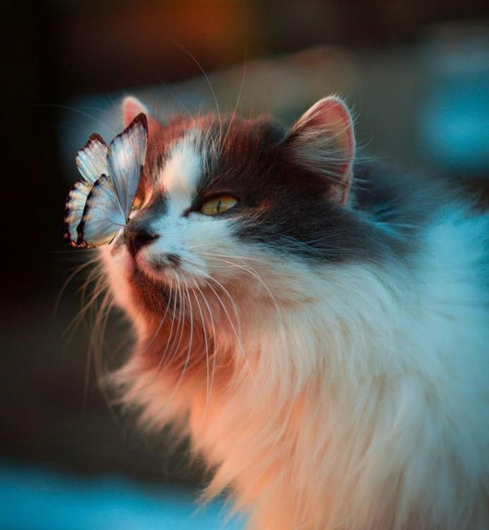 Фото прикол  про котов и бабочек