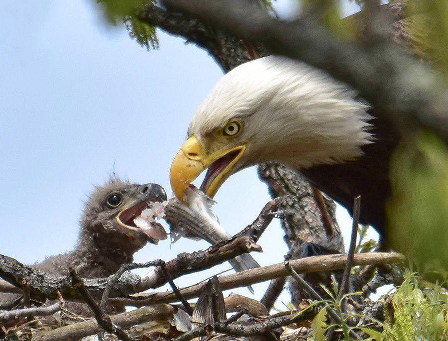 Фото леси из орла и решки родители немного