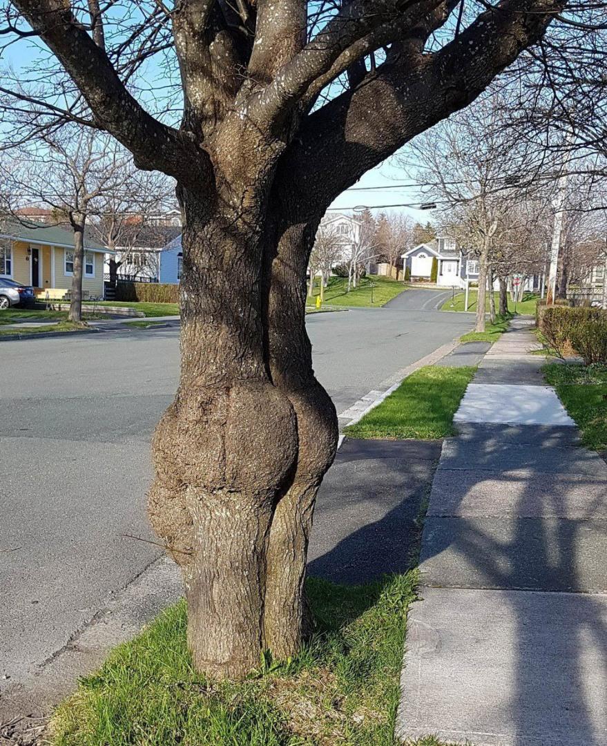 Поздравлением, дерево прикол картинка
