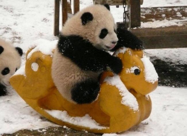 Фото прикол  про панду