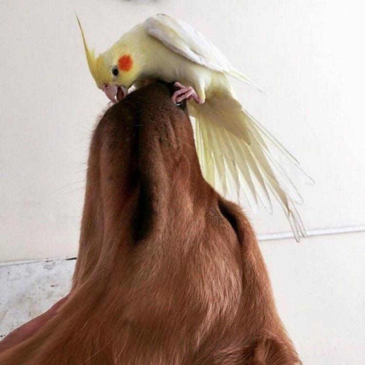 Фото прикол  про попугаев и собак