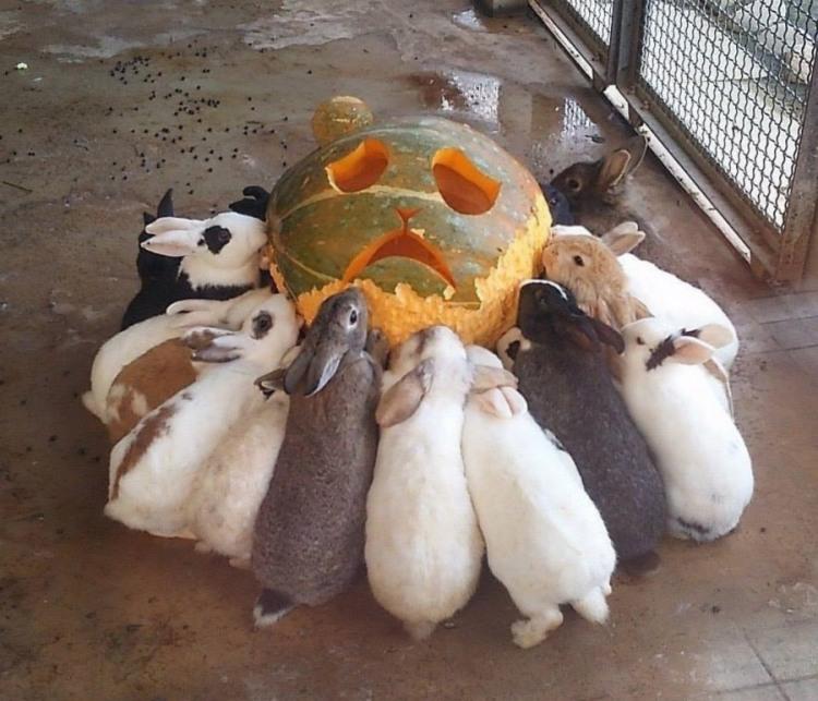 Фото прикол  про кроликов и тыкву