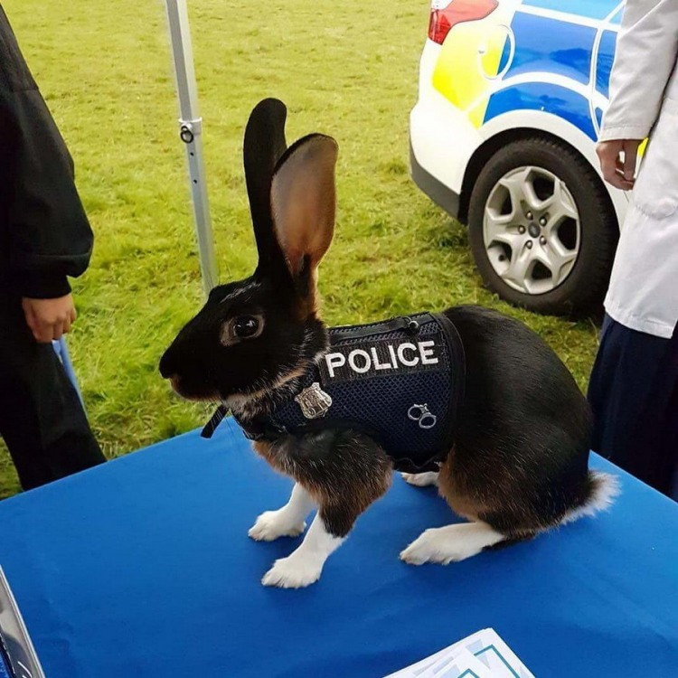 Фото прикол  про кроликов и полицию