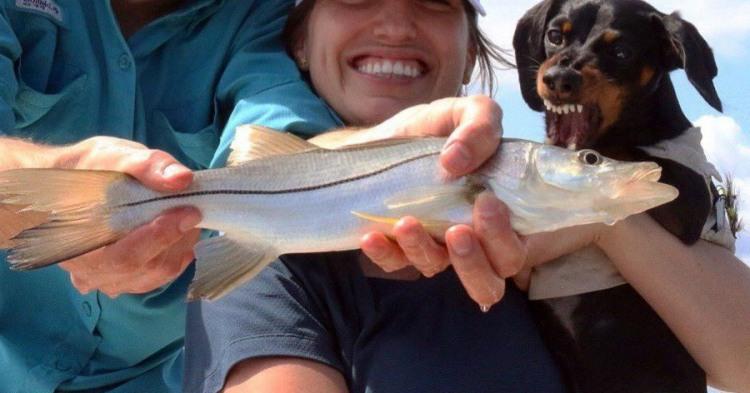 Фото прикол  про собак и рыбу