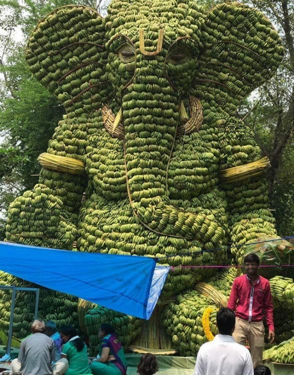 Фото прикол  про банан и слонов