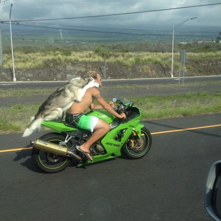 Фото прикол  про мотоциклистов и собак