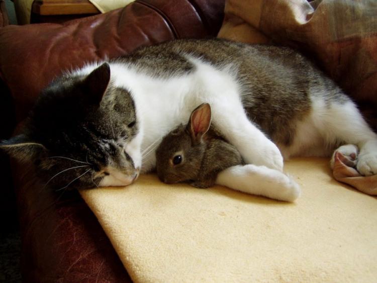 Фото прикол  про котов и кроликов