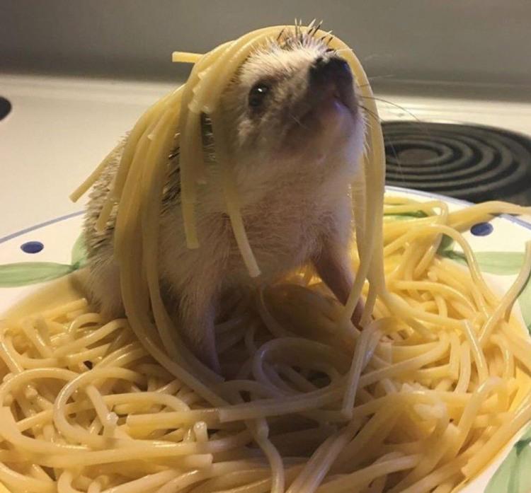Фото прикол  про ежей и спагетти