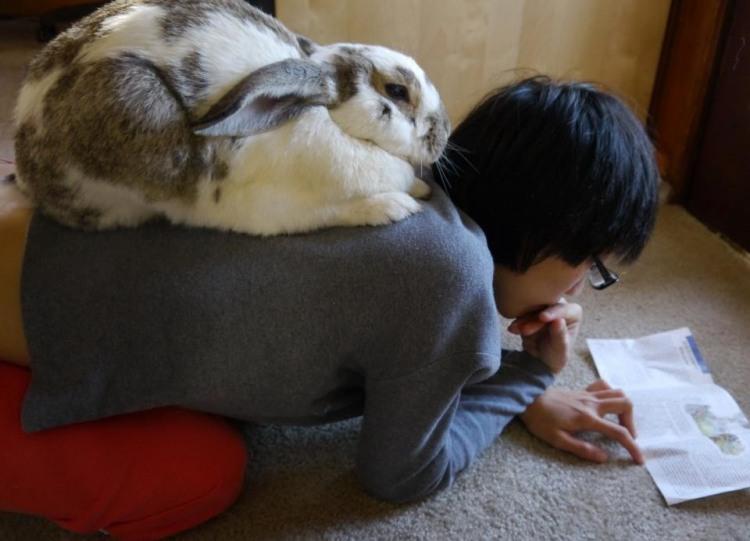 Фото прикол  про кроликов