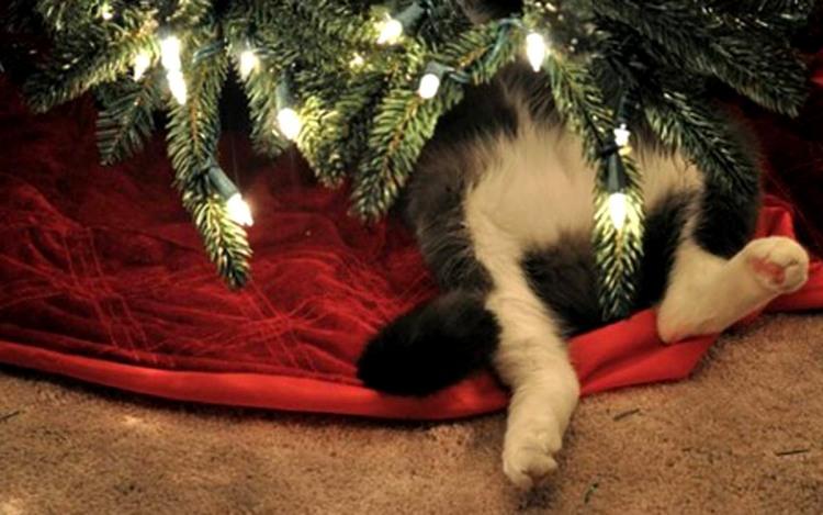 Фото прикол  про котов и новый год