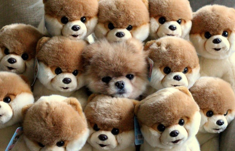 Фото прикол  про собак и игрушки