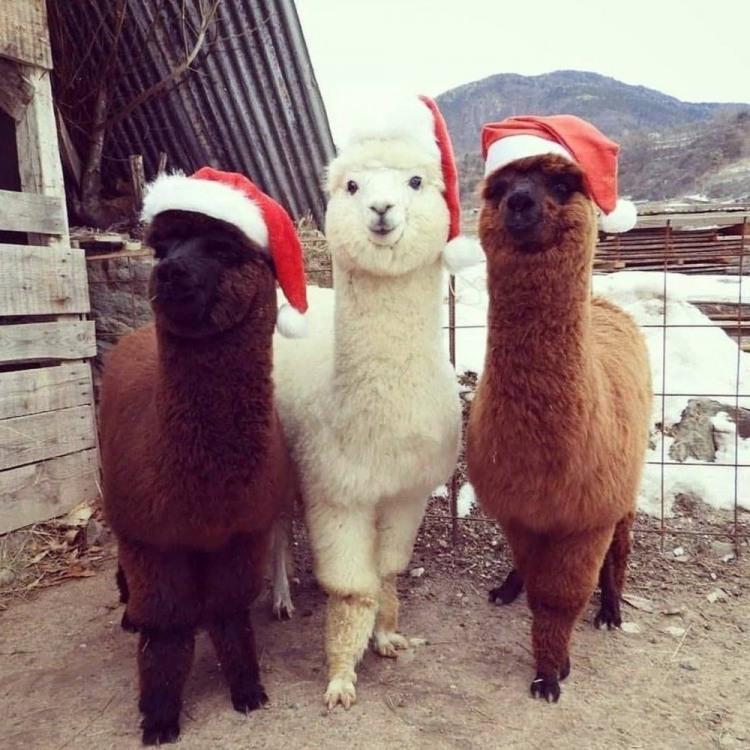 Фото прикол  про животных и новый год