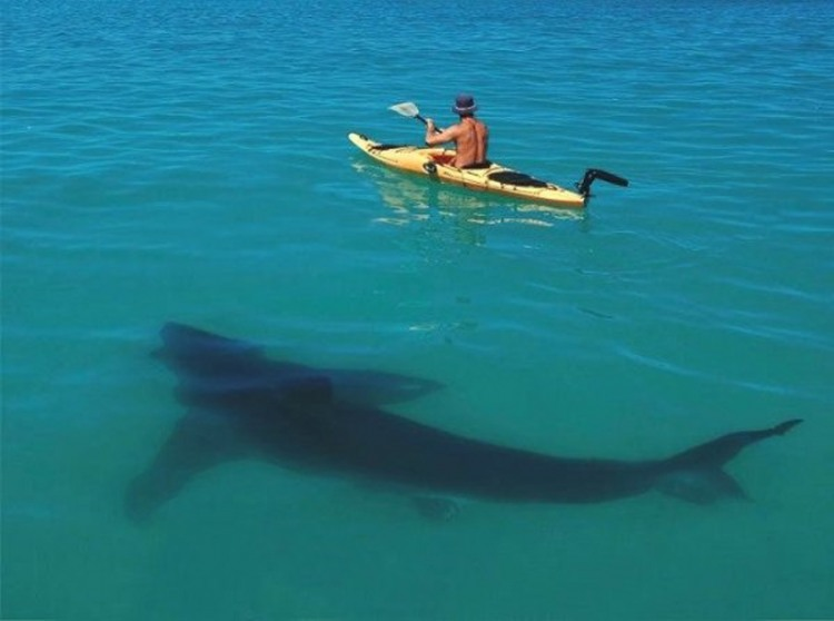 Фото прикол  про акул черный