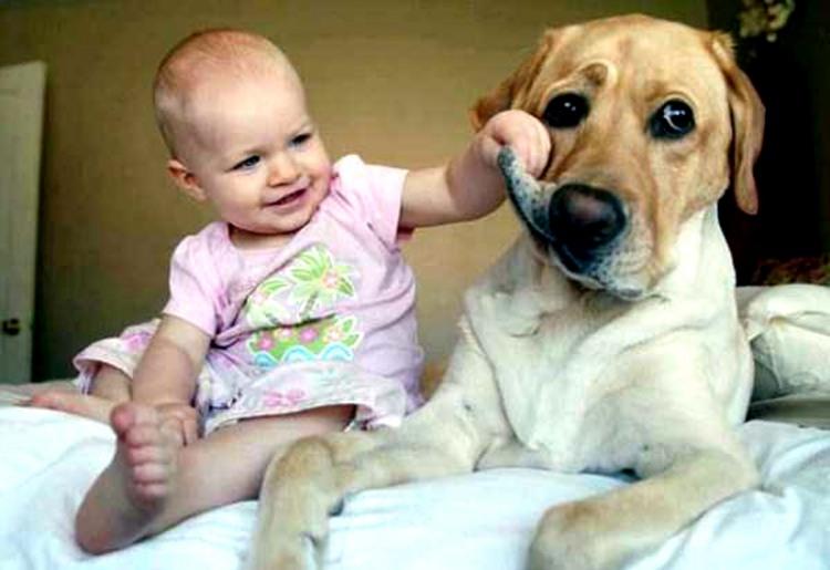 Фото прикол  про собак и детей