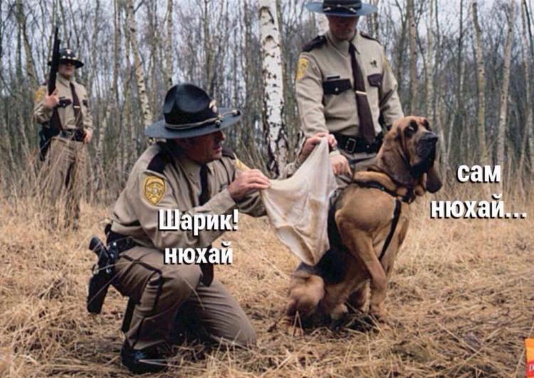 Фото прикол  про собак, трусы, полицию отвратительный