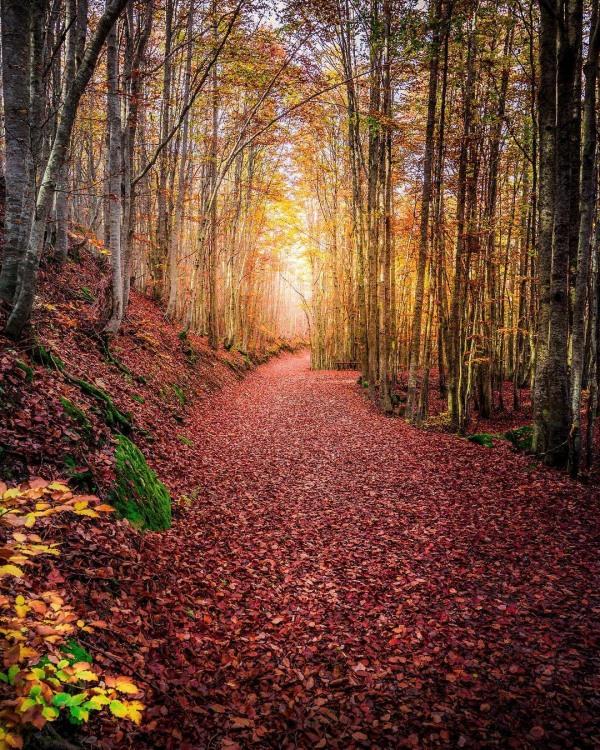 Фото прикол  про осень и лес