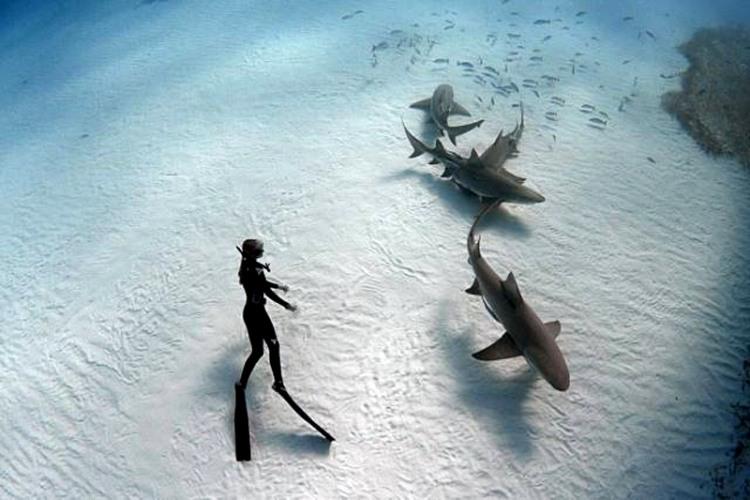 Фото прикол  про акул и водолазов