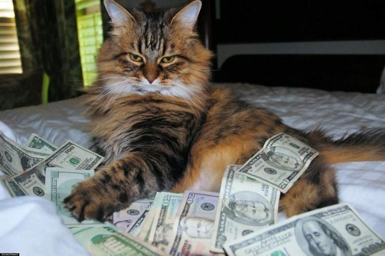Фото прикол  про котов и деньги