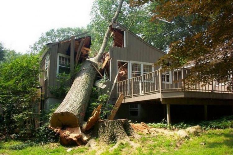 Фото прикол  про дерево, дом черный