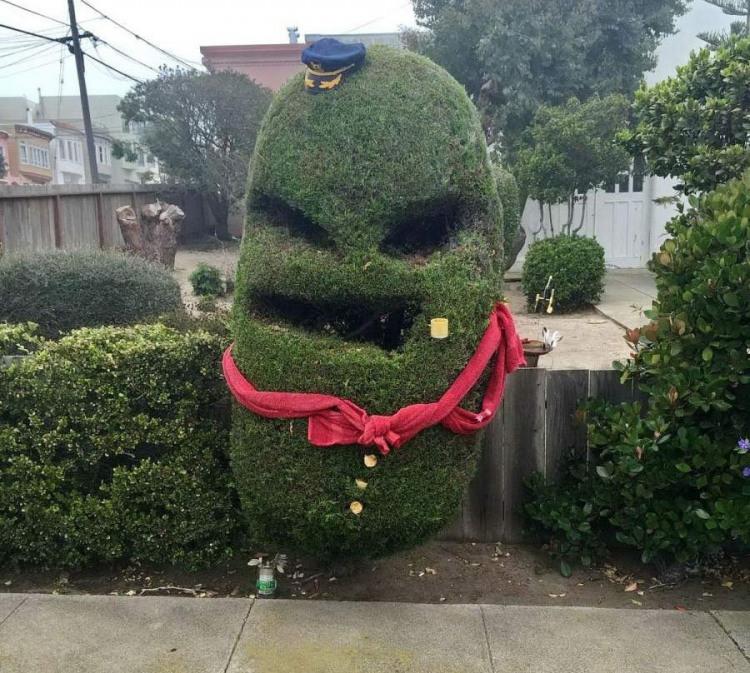 Фото прикол  про растения игра воображения