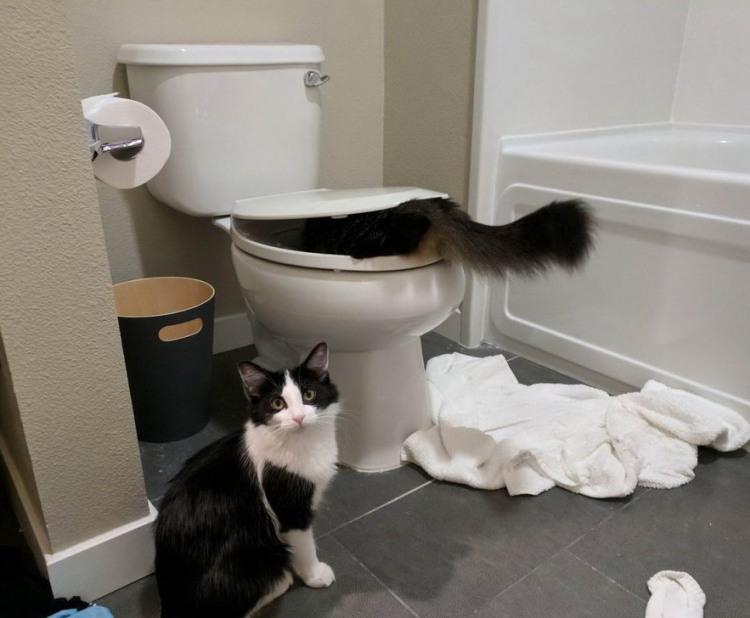 Фото прикол  про котов и унитаз