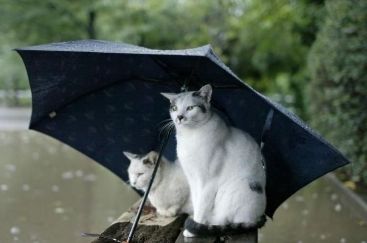 Фото прикол  про котов и зонтик