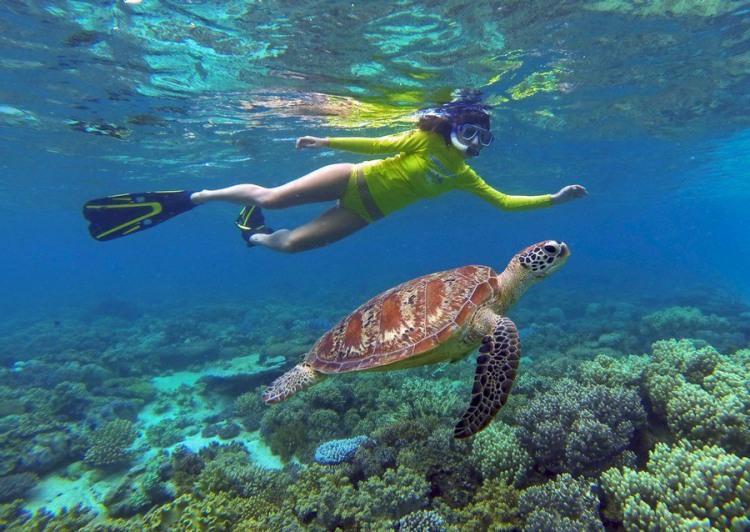 Фото прикол  про черепаху и водолазов