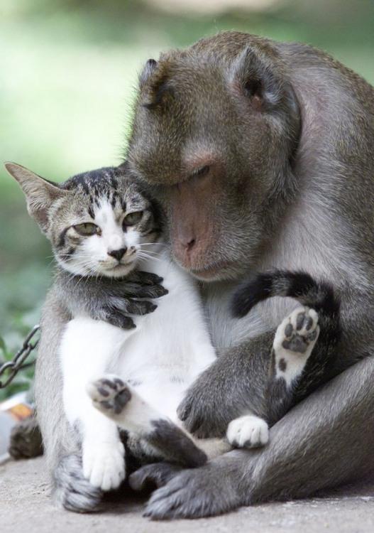 Фото прикол  про обезьян и котов