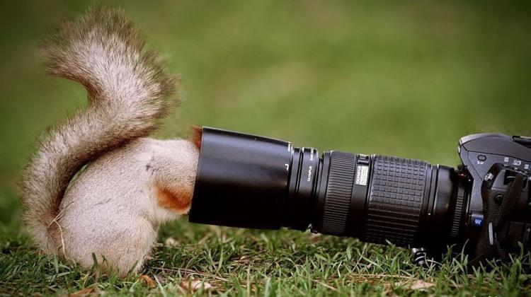 Фото прикол  про белку и фотоапарат