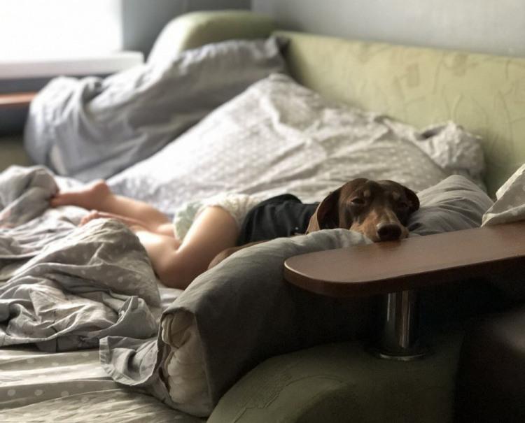 Фото прикол  про собак игра воображения