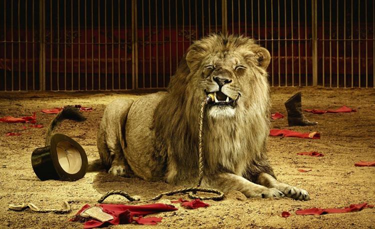 Фото прикол  про льва, дрессировщика, черный жестокий