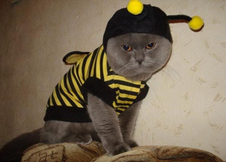Фото прикол  про котов и пчёл