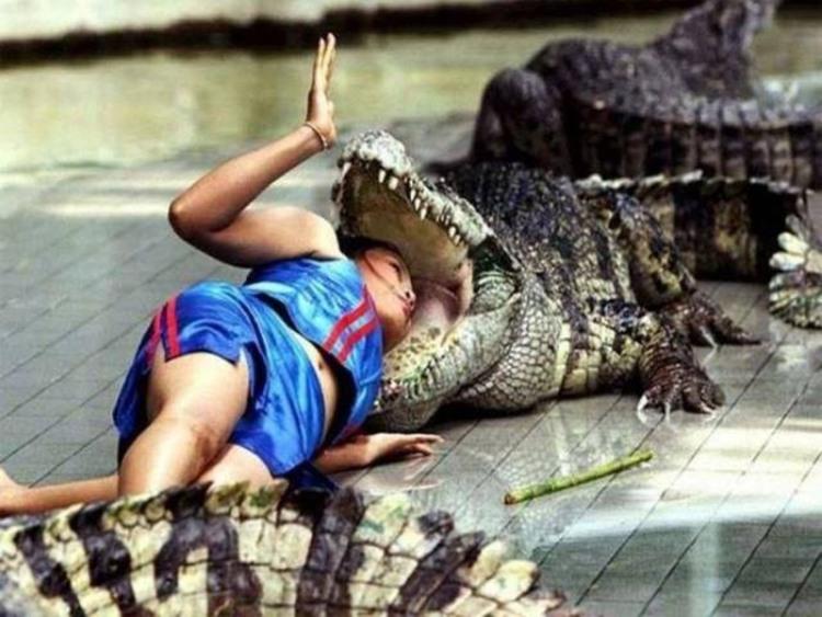 Фото прикол  про крокодилов черный