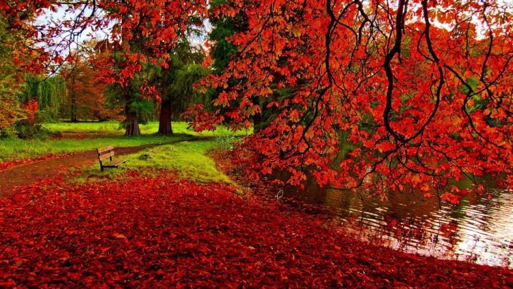 Фото прикол  про осень