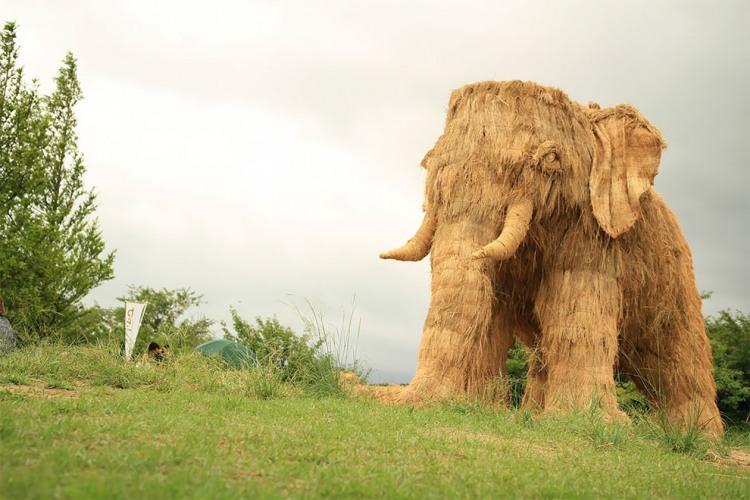 Фото прикол  про солому и слонов