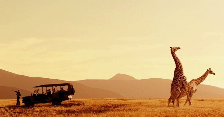 Фото прикол  про жирафа