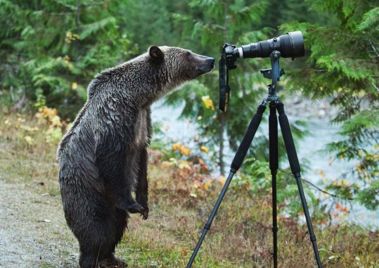 Фото прикол  про медведей и фотоапарат